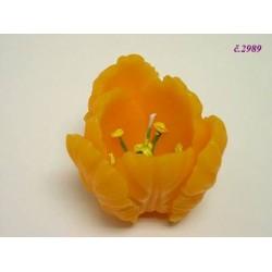 2989 Svíčka tulipán