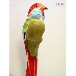 3229 Papoušek