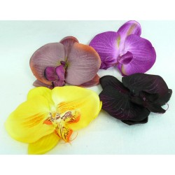 3107 Orchidea hlavička