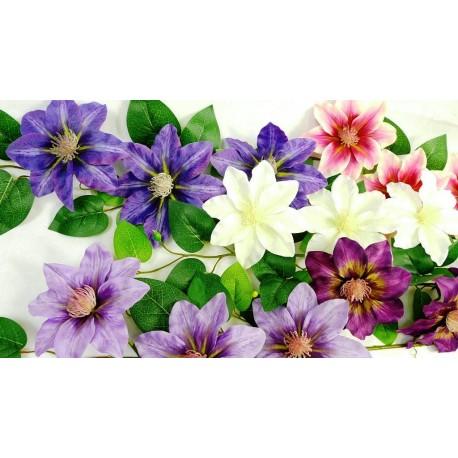 4487 Clematis 3 květy