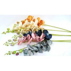 3731 Orchidea bílá velká