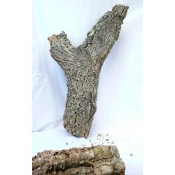 4888 Kůra z korkového dubu