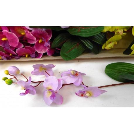 5122 Orchidea s listem