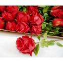 5479 Růže V15